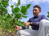 支援制度の充実だけじゃない。山形県白鷹町で農業を始めるべき2つの理由