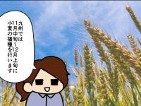 漫画「跡取りまごの百姓日記」【第79話】まご家の麦踏み事情
