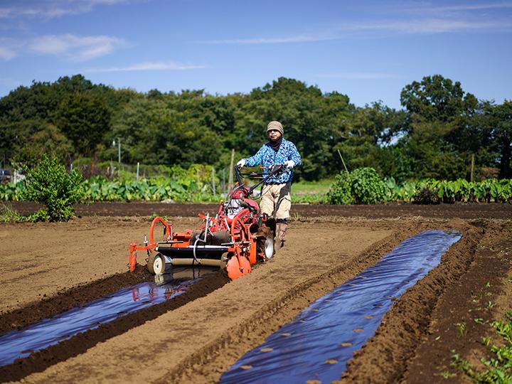都内で気軽に半日でも。農業体験するなら「広域援農ボランティア」がおススメ