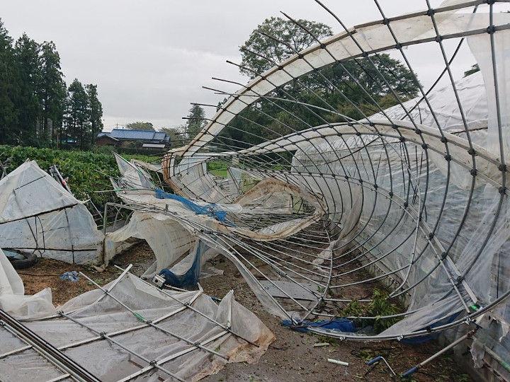 画像1)台風15号で壊れた栽培ハウス