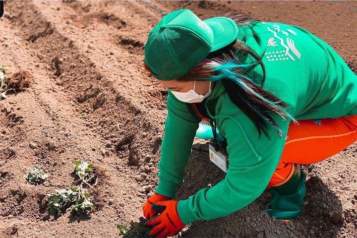 苗を定植する女子プロレスラー