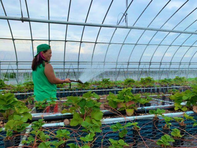 ビニールハウスの中で農作業をする女子プロレスラー