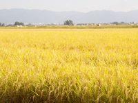 """""""会津のへそ""""に実りの秋がやってきた! 生産者の情熱とあくなき探究心によって育まれる湯川産農産物の魅力"""