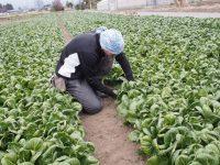 引きこもり状態から農家サラリーマンへ「有機農園への就職」という夢をかなえる方法【畑と人材育成とvol.6】