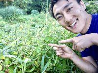 生える雑草を意図的に変える! 雑草の法則を知ろう【畑は小さな大自然vol.92】