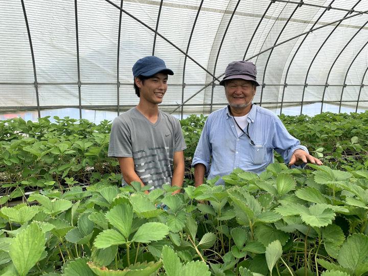 松山市内のイチゴ農家と就農を決めた学生