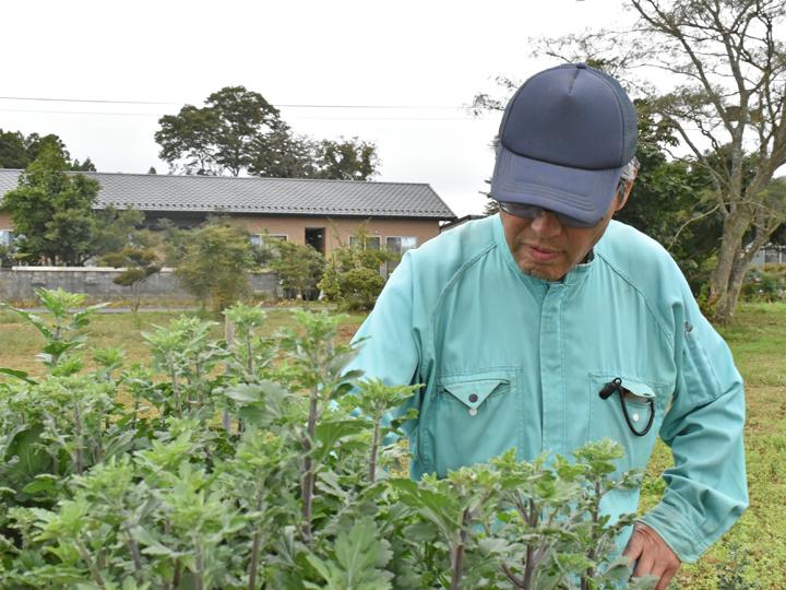 片草地区の気候風土に合うコギクの試験栽培を行っている畑。コギク栽培への思いを話してくれた原好光さん