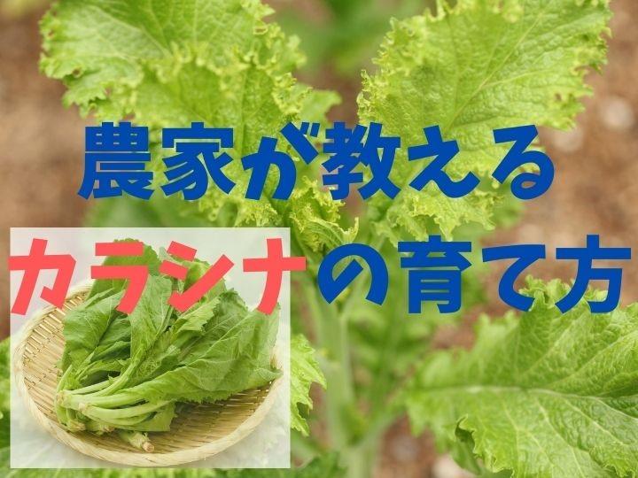 農家が教えるカラシナの栽培方法 葉っぱは食べて、種で手作りマスタードに挑戦!
