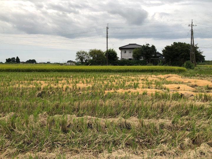 稲刈りを終えた田んぼ