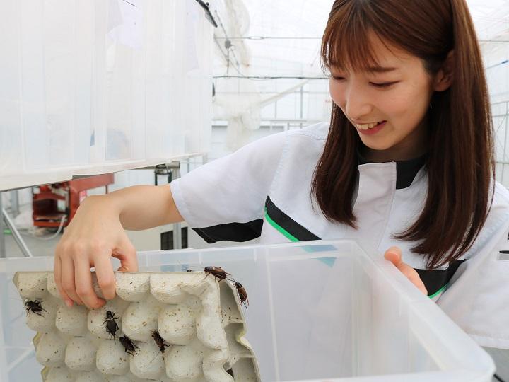 「エコなタンパク源」昆虫食のいま 食用コオロギ生産工場も取材