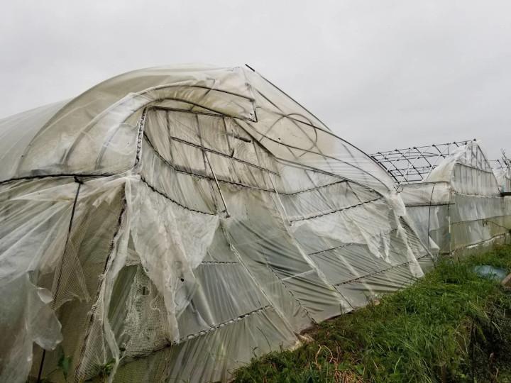 台風で壊れた栽培ハウス