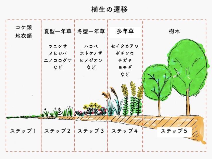 植生の遷移 カラー