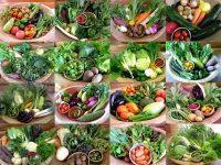 野菜セットの作り方実践編 20年のノウハウを公開【ゼロからはじめる独立農家#15】
