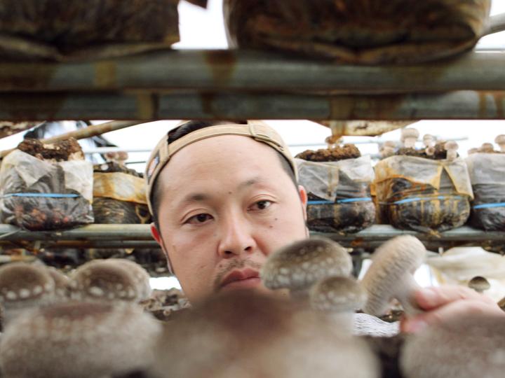「福島県安心きのこ栽培マニュアル」に基づいて栽培。自信をもって安全な菌床キノコ栽培に取り組んでいます