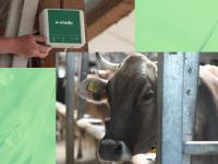 「シンプル」を極める乳牛監視システム─農業・IT先進国のポーランドから世界に展開する「e-stado」