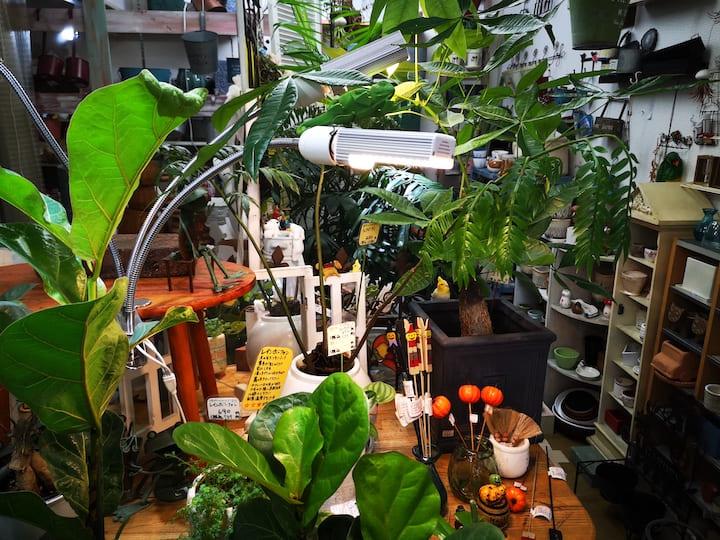 植物用LEDライトが照らしている