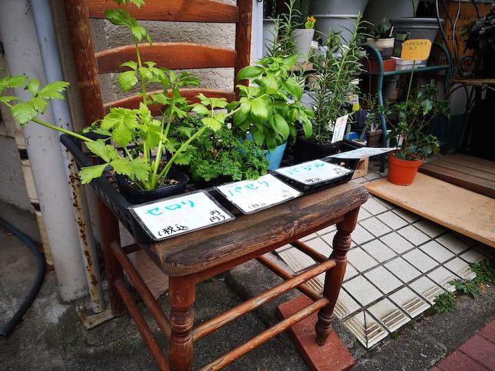 ガーデニングショップの店頭にある野菜の苗