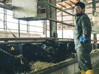 肉牛とは? 種類や乳牛との違い、肉牛農家の経営や仕事内容、肉牛農家を目指すには?