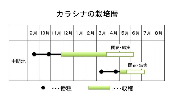 カラシナの栽培暦