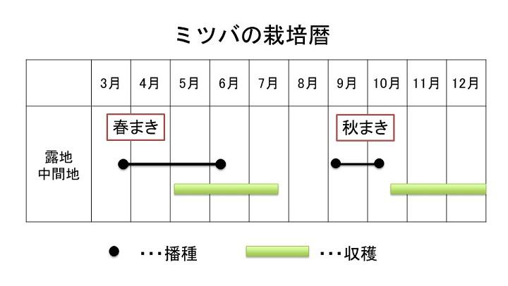 ミツバの栽培暦
