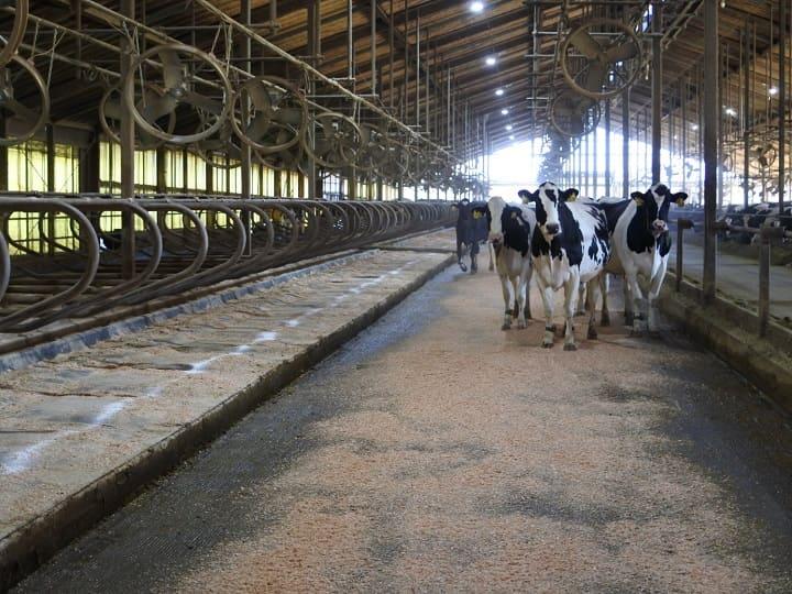 掃除が完了した牛舎