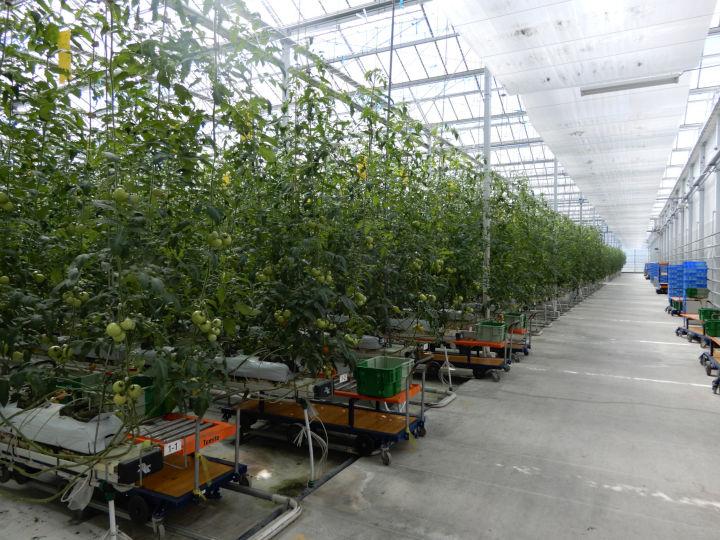 次世代施設園芸拠点の成否とは? 滑り出しを決める生産管理と労務管理