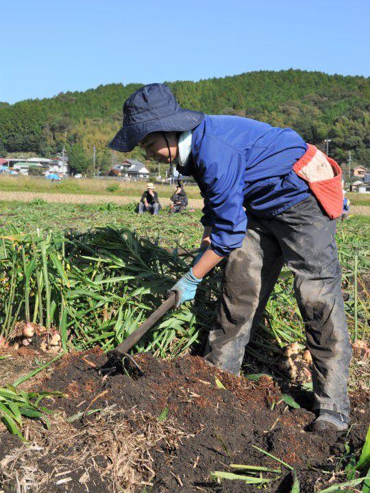 コバマツが収穫してみた 土を耕す