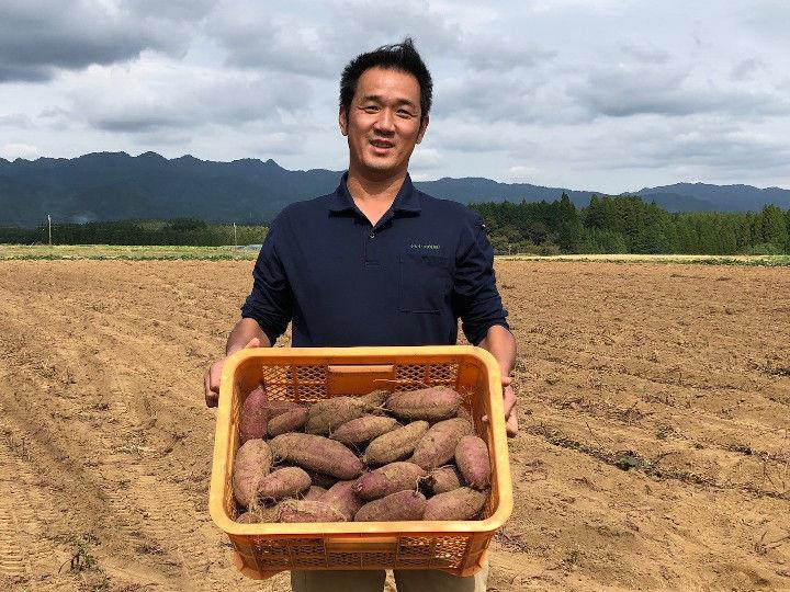 サツマイモは農協出荷