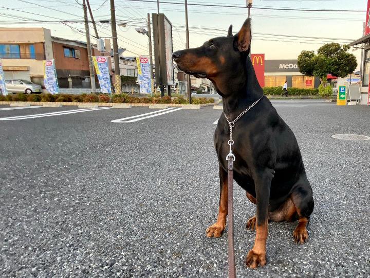 愛犬の散歩