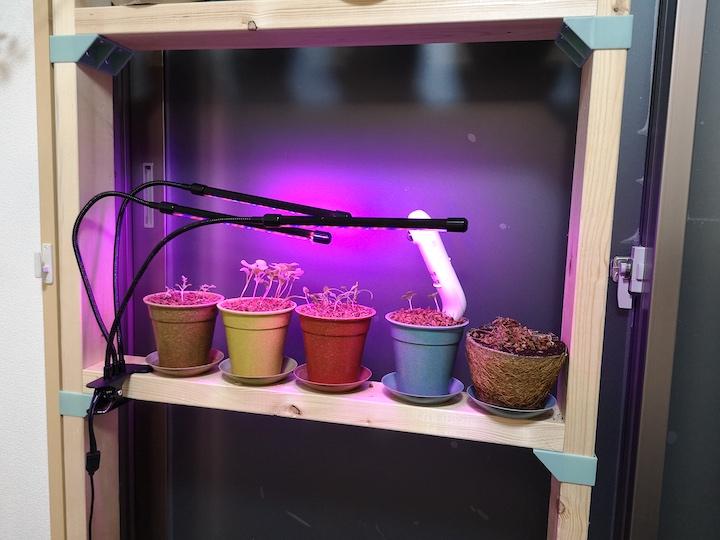 家庭内野菜栽培用の紫色ライト