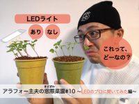 室内で野菜栽培できるLEDライトとは? 選び方のコツをプロに聞く!