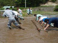 転換期の農業に求められる人材とは 人手不足解消への手立て