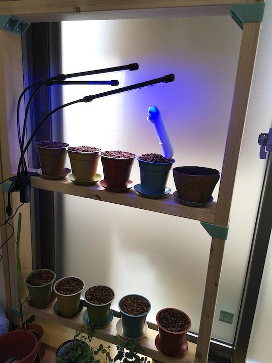 窓際で野菜を育てている写真