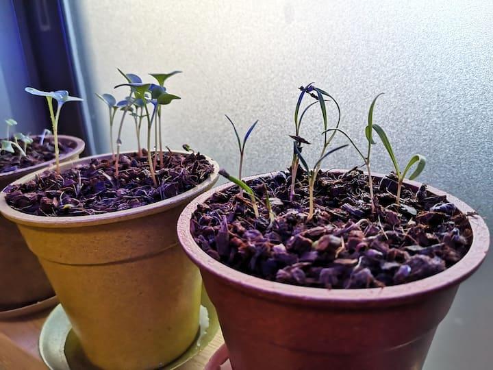 LEDを使って育ててみた野菜