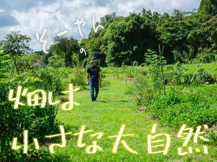 畑は小さな大自然