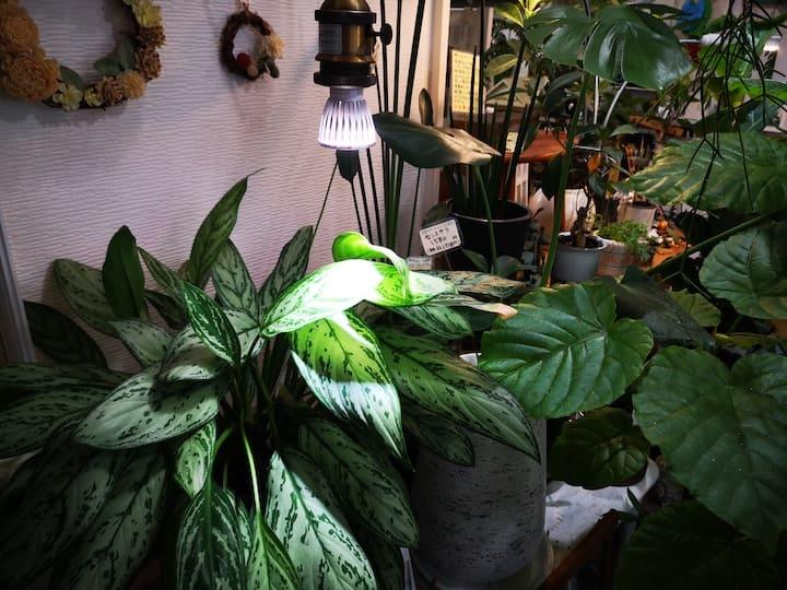 ガーデンショップで植物にライトがあたっている写真