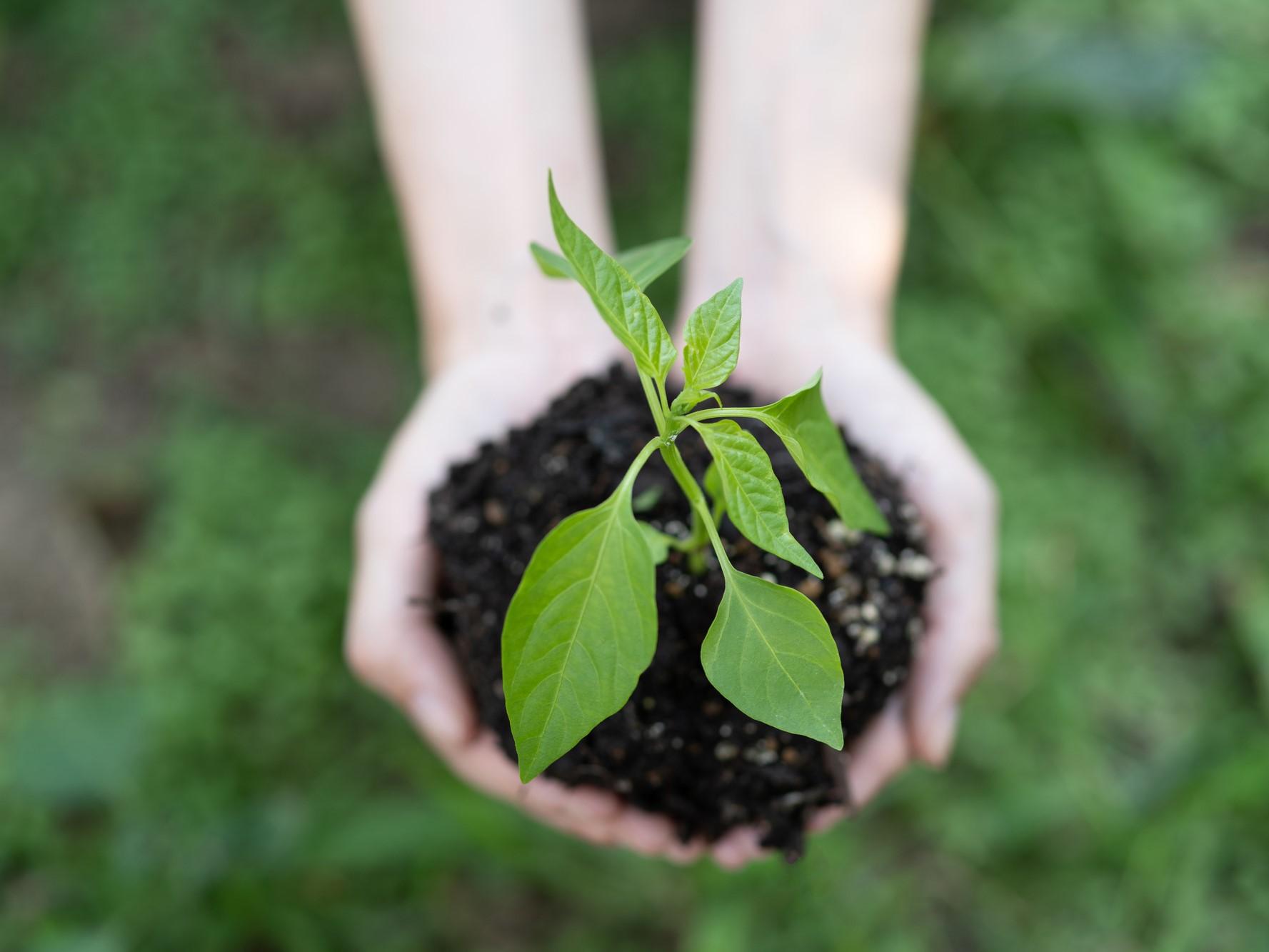 苗を守る人の手