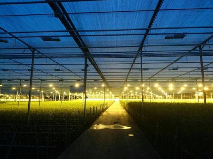 オランダ農業の現場から