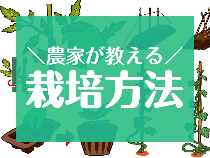 農家が教える栽培方法
