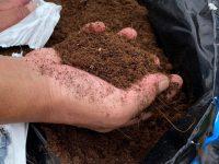 軽くて万能!天然の土壌改良材『ココピート』のおすすめ活用術