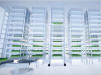 進化する植物工場。2021年には全自動化や1日1.3t出荷の工場も誕生!?