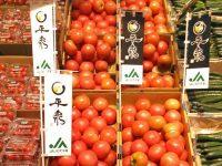 岩手県一関のトマトで儲ける! 売上1000万を目指すトマト農家に聞く、トマトで稼ぐ秘訣とは
