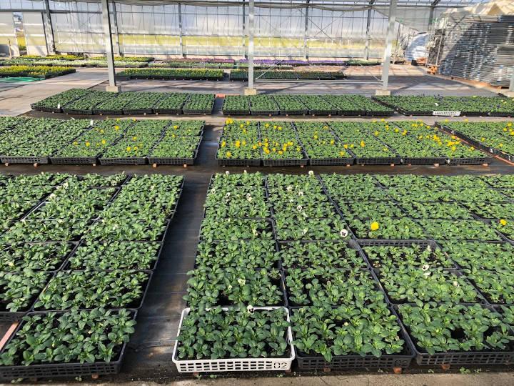 収益の柱の野菜や苗の栽培