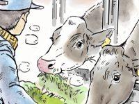 酪農漫画「うしだらけの日々」 第17話 酪農の年末年始は?