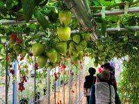 注目のイタリア野菜新品種は? トキタ種苗研究農場オープンデーに行ってきた