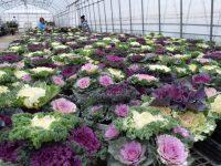 人口減少トップの秋田で園芸をするとはどういうことか