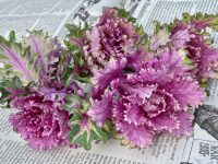 ベランダでも簡単に栽培、6カ月間楽しめるプチヴェール その魅力を紹介!
