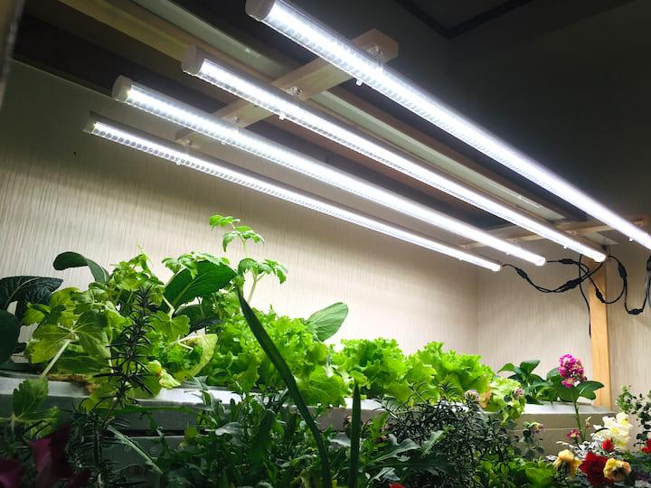 家庭内野菜栽培用の白色ライト