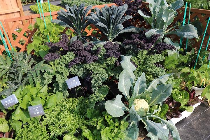 おしゃれに寄せ植えされたイタリア野菜たち