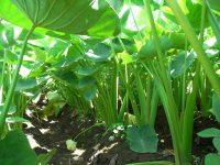少量多品目農家の武井が栽培をやめた野菜5選。やめた理由とその結果を語る